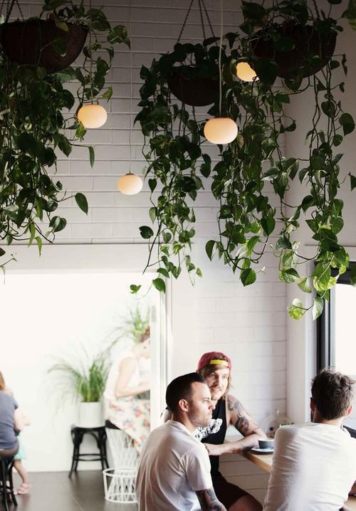 Indoor Plants! : Abbey Carpet of San Francisco