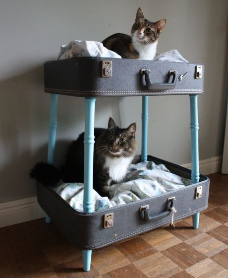 Feline-Friendly Design via Abbey Carpet of SF